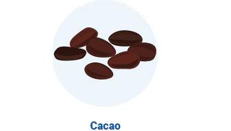 Ilustración de cacao